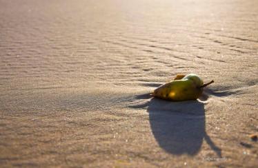 beach_DSC5043