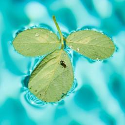 ant water4©jenhammer