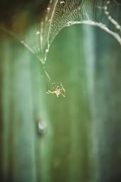 spider8©jenhammer