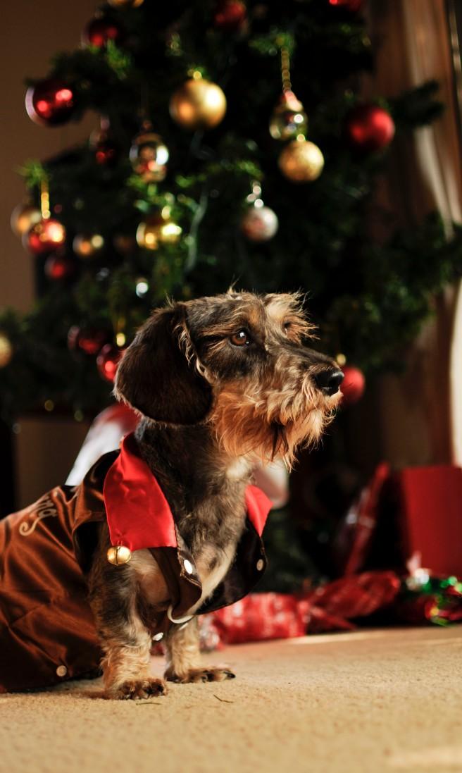 'Santa Claus is coming to town, la la la la'