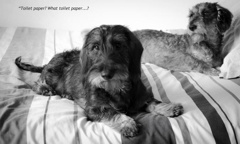 Oscar & Stanley
