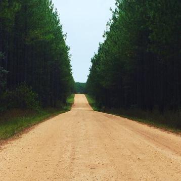 Pine trees...