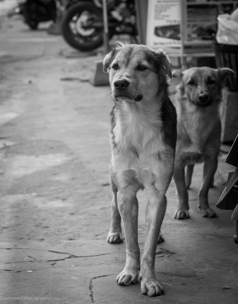 cambodia (1 of 1)-13