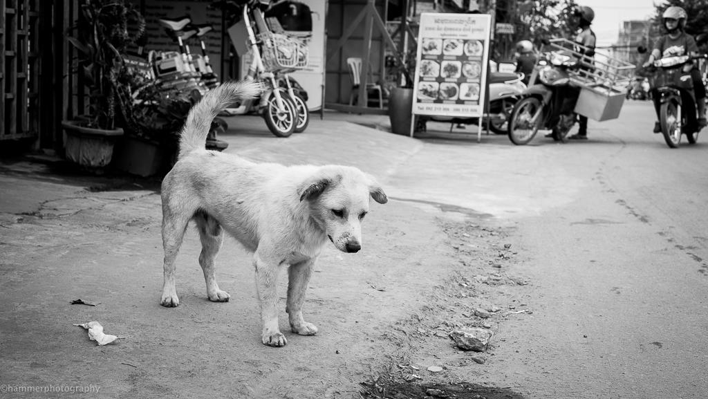cambodia (1 of 1)-7